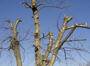 topped-tree-w610